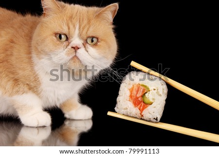 Exotic cat looking at piece of sushi, isolated on black background - stock photo