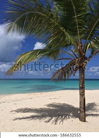 Exotic coconut palm tree on the tropical Caribbean beach
