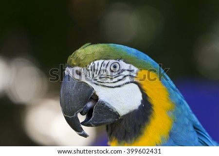 Exotic colorful macaw parrot, beautiful close up on bird face over natural green background. - stock photo