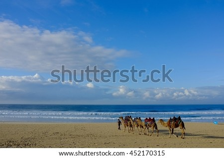 Exotic Enchanting Camel Train on Deserted Beach with Perfect Blue Sky.