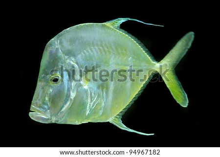 exotic fish - stock photo