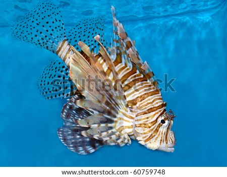 Exotic fish swimming in an aquarium - stock photo