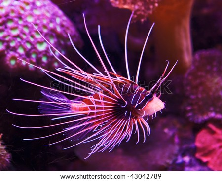 Exotic fish swimming in coral reef - stock photo