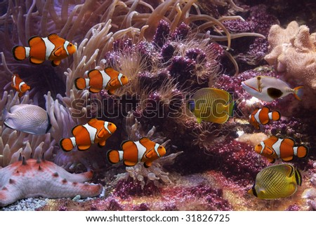 Exotic fishes - stock photo