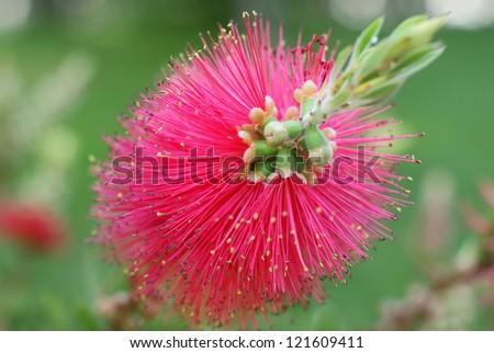 Exotic flowers - stock photo