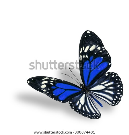 Exotic flying blue butterfly on white background with soft shadow beneath - stock photo