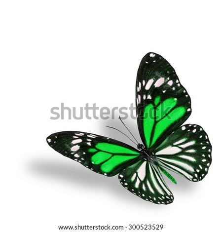 Exotic flying green butterfly on white background with soft shadow beneath - stock photo