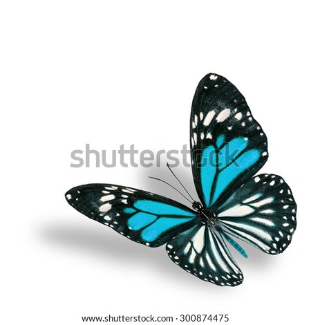 Exotic flying pale blue butterfly on white background with soft shadow beneath - stock photo