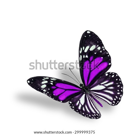 Exotic flying purple butterfly on white background with soft shadow beneath - stock photo