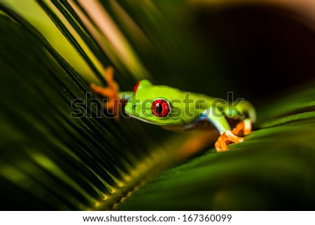 Exotic frog in natural rain forest - stock photo