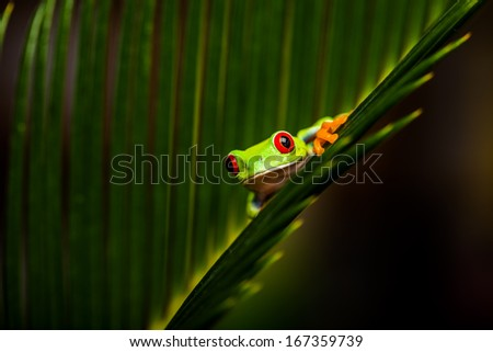 Exotic frog in tropical forest - stock photo