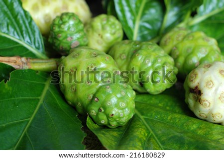 exotic fruit / great morinda, Indian mulberry, beach mulberry, Tahitian noni , noni, nono, meng kudu, nonu , ach - stock photo