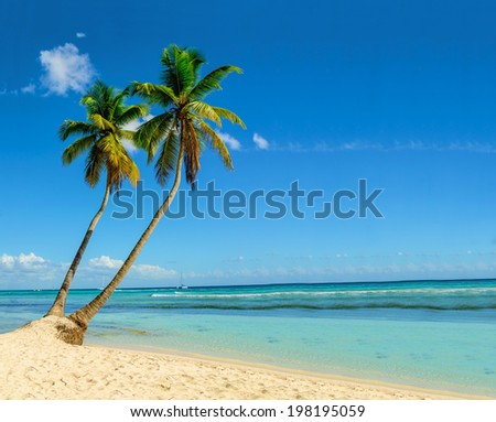 Exotic island with beautiful tall palm trees  - stock photo
