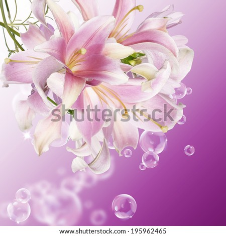 Exotic Japanese Lily.Floral background.Nature - stock photo