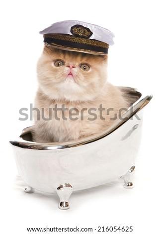 exotic kitten in a small silver bath studio portrait - stock photo