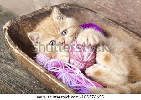 Exotic kitten playing with a ball of wool - stock photo