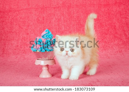 Exotic kitten with large cupcake on cupcake stand on bright pink background - stock photo