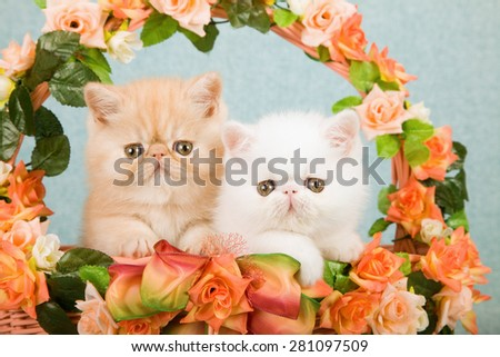 Exotic kittens sitting inside basket decorated with orange and peach silk flowers on mint green background