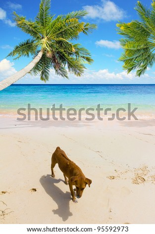 Exotic Landscape Island Robinson - stock photo