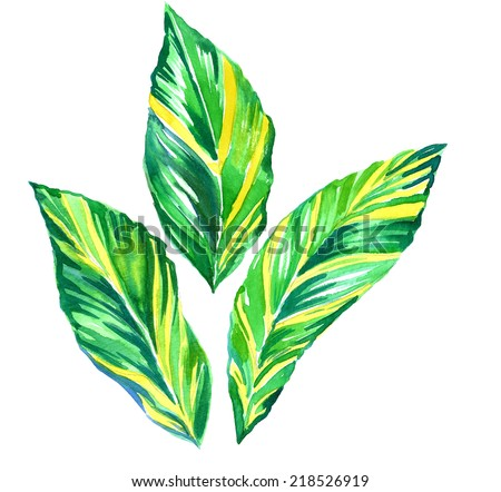 exotic leaves - stock photo