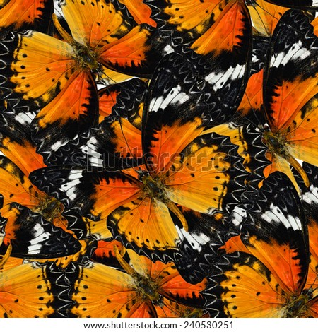 Exotic Orange Background Textured from Leopard Lacewing Butterflies in the best design - stock photo
