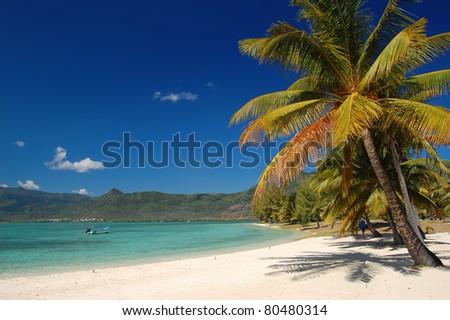 Exotic palm beach of Paradis hotel on Mauritius island - stock photo