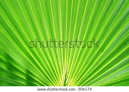Exotic Palm Leaf
