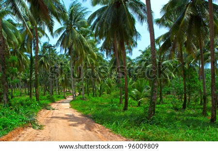 Exotic palm trees forest