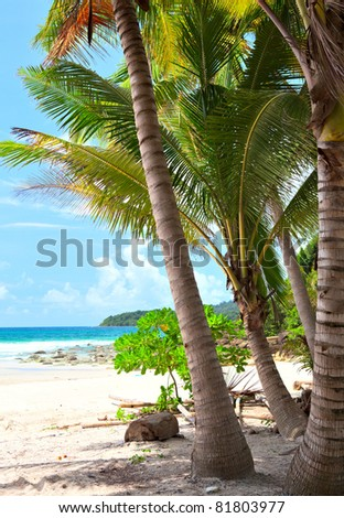 Exotic palm trees on luxury white sand beach near clear sea and under blue sky - stock photo