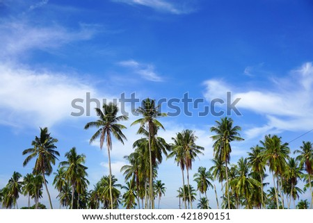exotic palm trees with perfect blue sky - stock photo