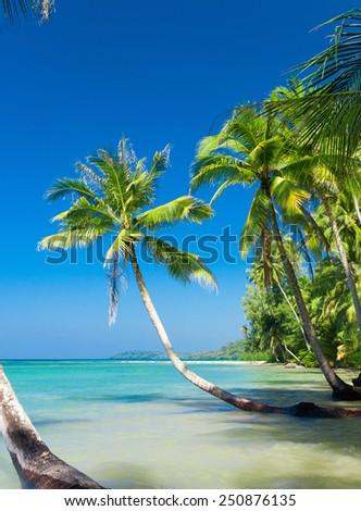 Exotic Paradise Green Getaway  - stock photo