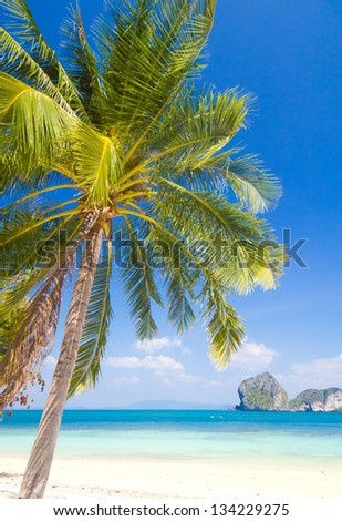 Exotic Paradise Palm View