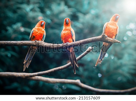 Exotic parrots sit on a branch, wildlife - stock photo