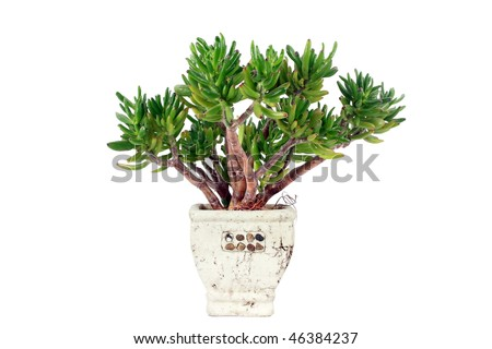 Exotic plant in flowerpot isolate on white. - stock photo