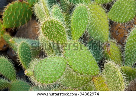 Exotic plants. Close-up of a prickly cactus - stock photo
