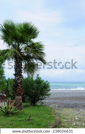 Exotic plants on the Black Sea coast - stock photo