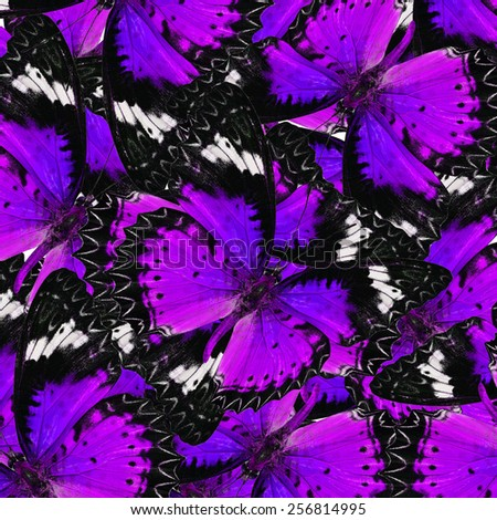 Exotic Purple Background Textured from Leopard Lacewing Butterflies in the best design - stock photo