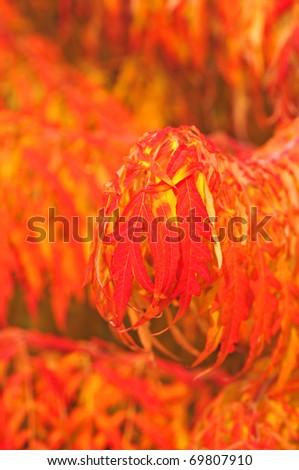 exotic red fall plants floral background