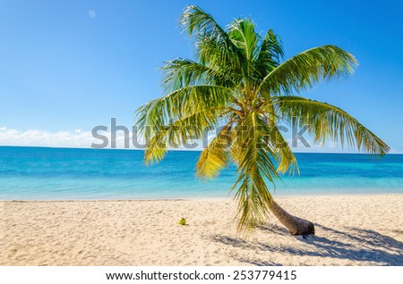 Exotic sandy beach with palm and coconut against blue sky and azure water - stock photo