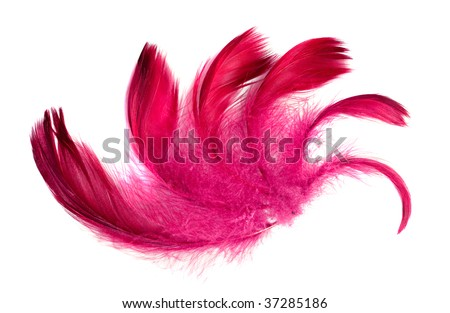 exotic soft beautiful feather on white background - stock photo