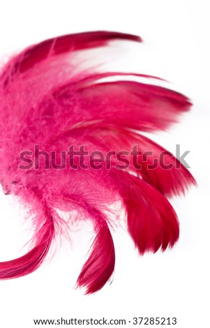 exotic soft beautiful feather on white background