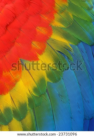 Exotic texture feathers background, closeup bird wing. Colorful parrot feather background - stock photo
