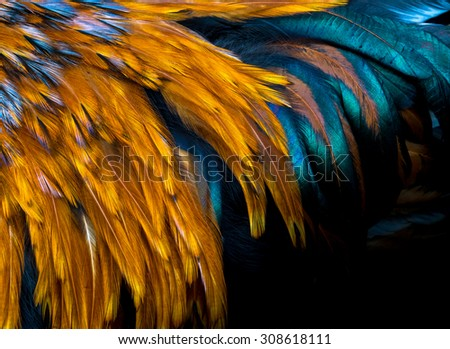 Exotic texture feathers background, closeup bird wing. Red-brown and black feathers for your pattern. - stock photo