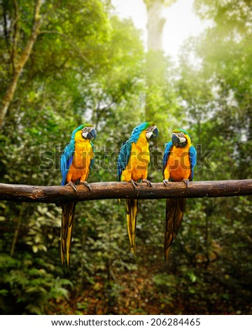 Exotic travel concept background - Blue-and-Yellow Macaw (Ara ararauna), also known as the Blue-and-Gold Macaw on branch in tropical forest - stock photo