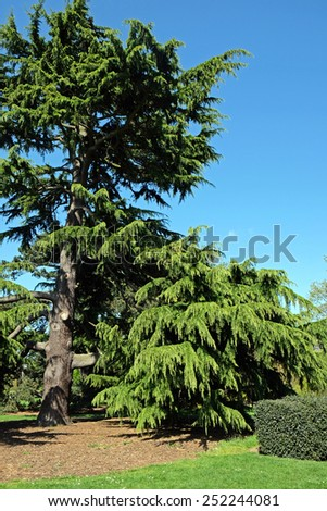 Exotic Tree - stock photo