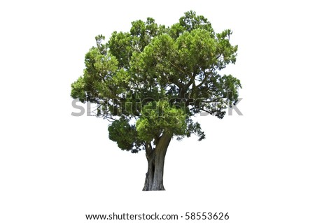 exotic tree isolated on white - stock photo