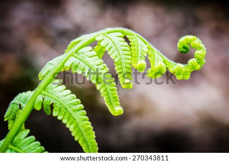 Exotic tropical ferns with shallow depth of field - stock photo