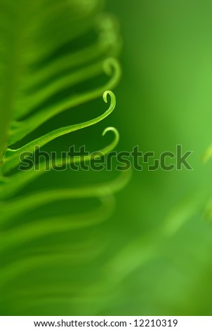 Exotic tropical ferns with shallow depth of field (dof) in Malaysia. - stock photo