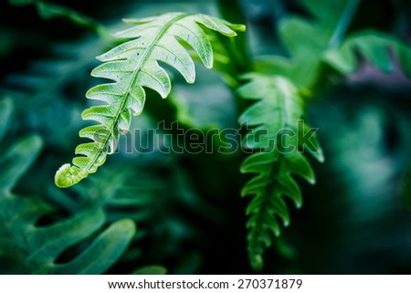 Exotic tropical ferns with shallow depth of field, vintage process - stock photo