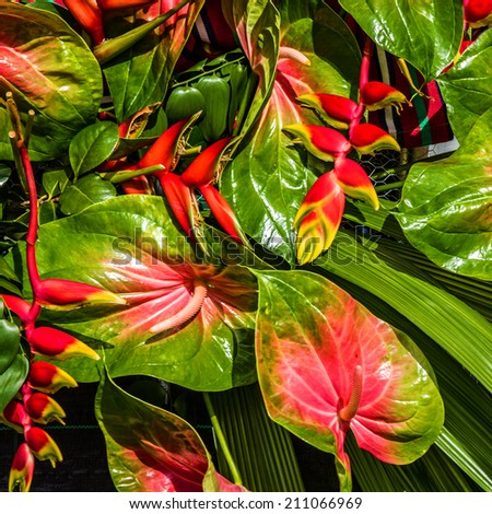 Exotic tropical flowers in Madeira, Portugal - stock photo